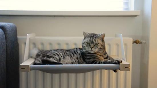 Costruzioni sostenibili e alla moda per gatti for Arredamento per gatti