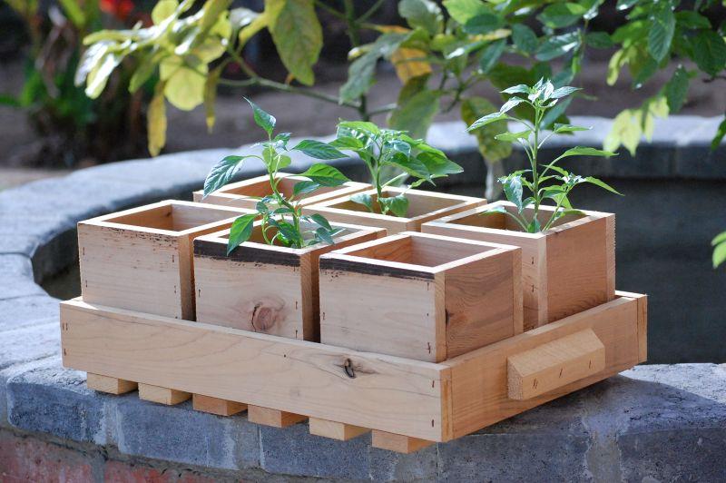 Il giardino luogo ideale per esperimenti di ecosostenibilit for Pidocchi rose bicarbonato
