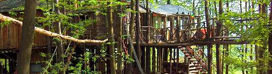 Case in legno sugli alberi in italia nasce il primo for Case in legno sugli alberi