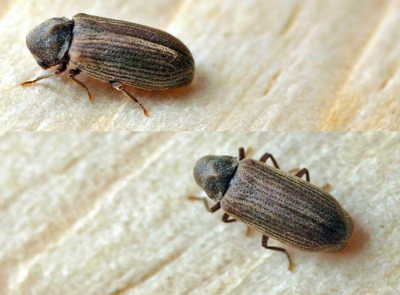 Il problema degli insetti nelle case prefabbricate in - Umidita ideale in casa ...